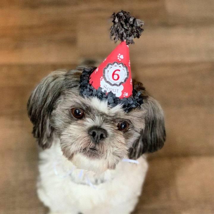 Puppy Birthday Hat