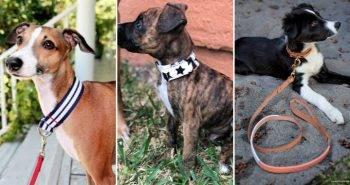 25 Personalized DIY Dog Collar Ideas