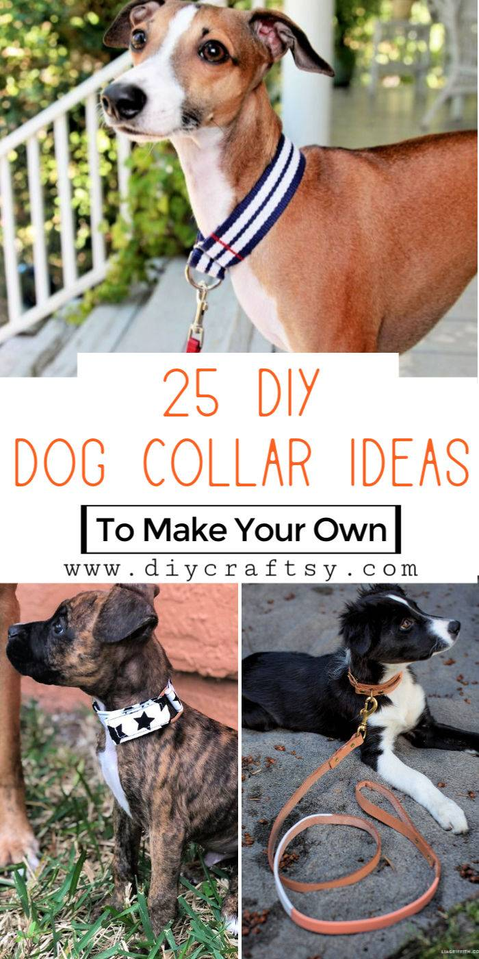 25 Personalized DIY Dog Collar Ideas To Make Your Own