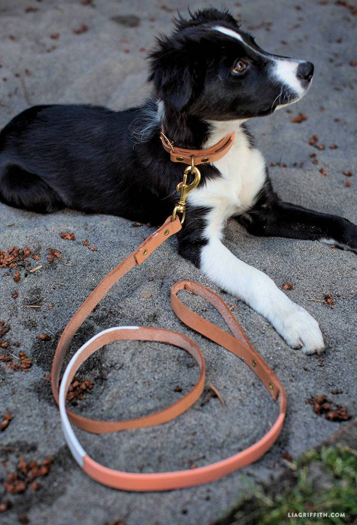 DIY Leather Dog Collar Leash