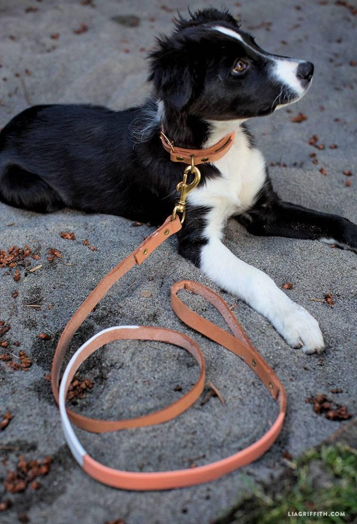 DIY Leather Dog Collar Leash