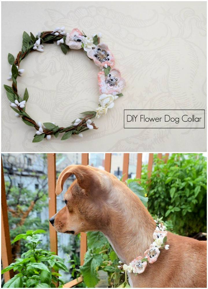 Homemade Dog Collar
