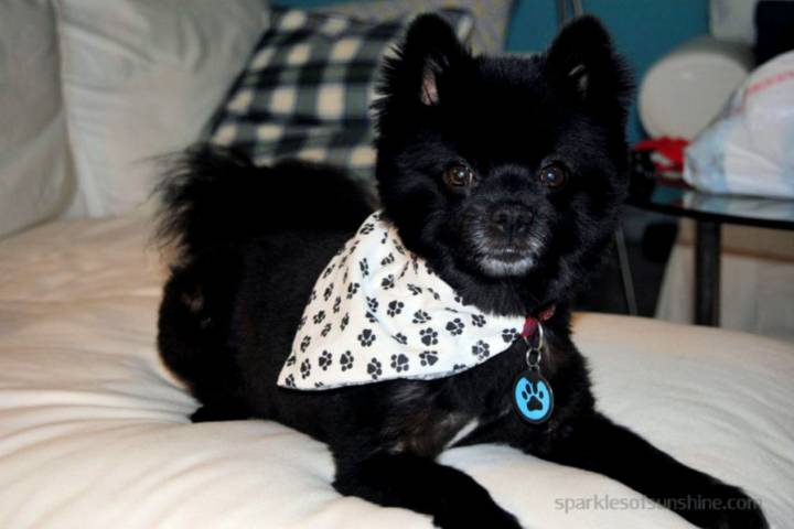 Reversible Slip Over The Collar Dog