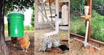 19 Cheap DIY Chicken Waterer Ideas