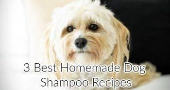 3 Simple Homemade DIY Dog Shampoo Recipes