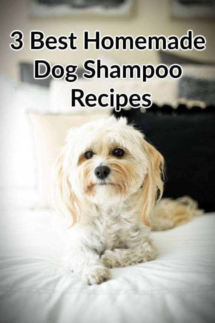 3 Simple Homemade Dog Shampoo Recipes