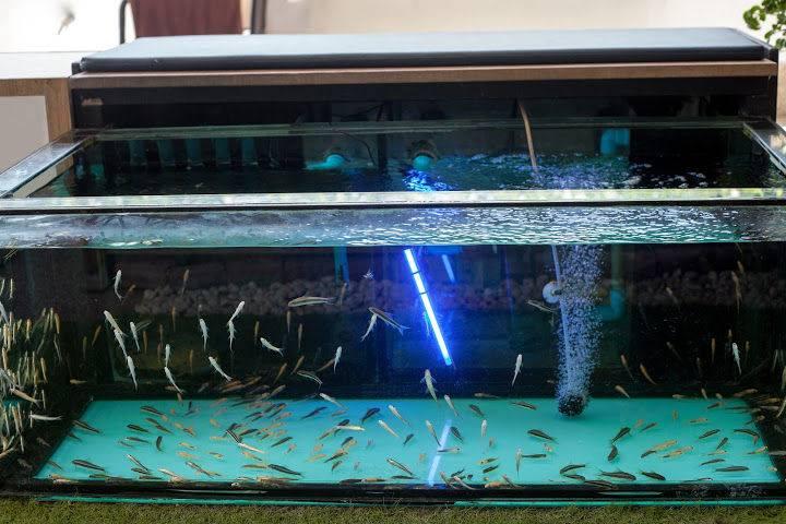 DIY Glass Aquarium A Step by Step Guide