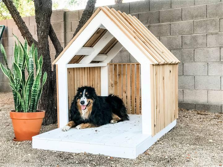 DIY Modern Dog House