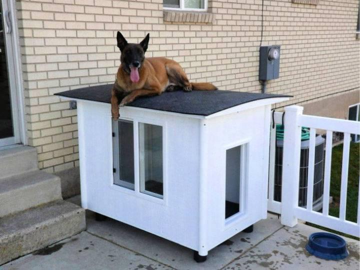 Knock Down Dog House