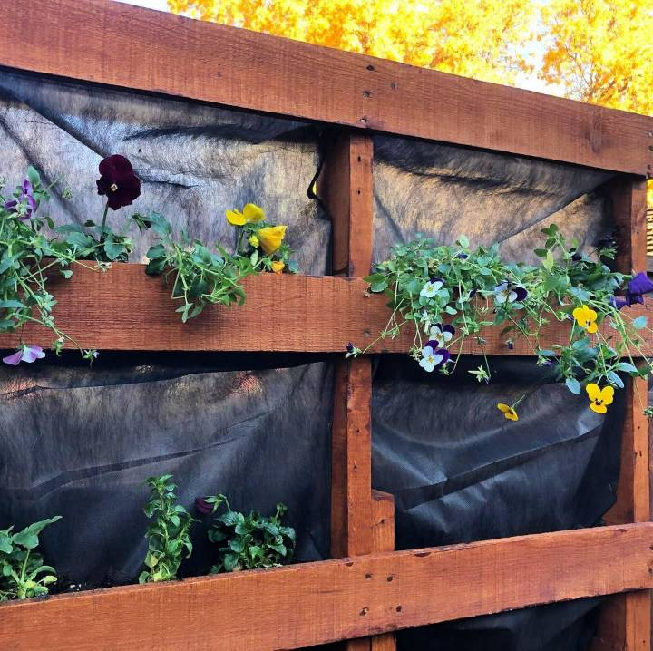 Made a standing garden out of a pallet and am finally planting in it.