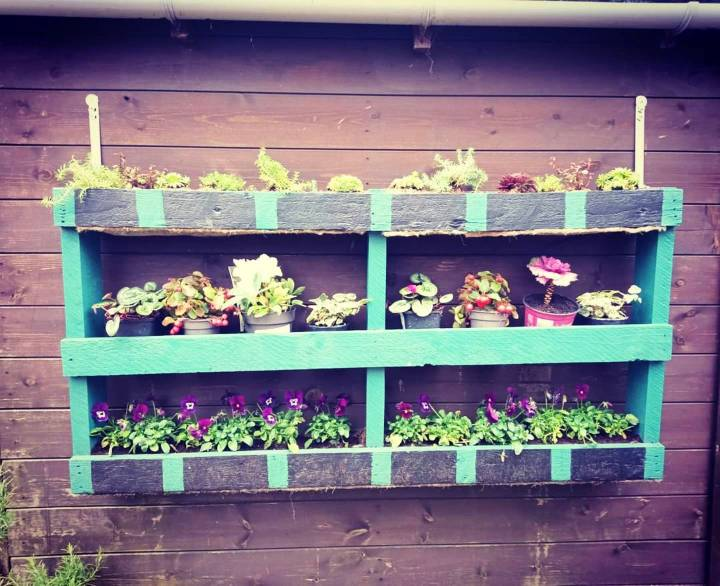 My first little pallet garden is finally up on the shed
