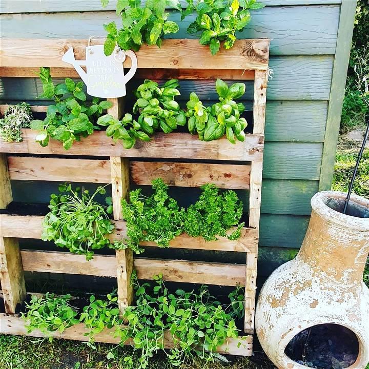 My herb garden in pallet