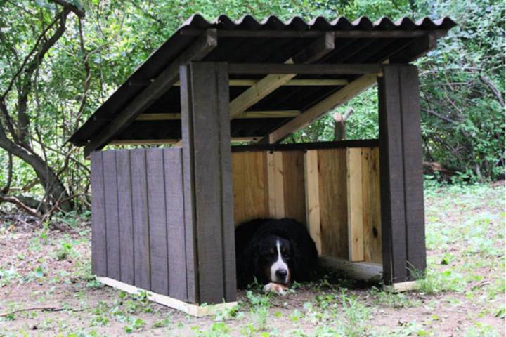 Open air Doghouse