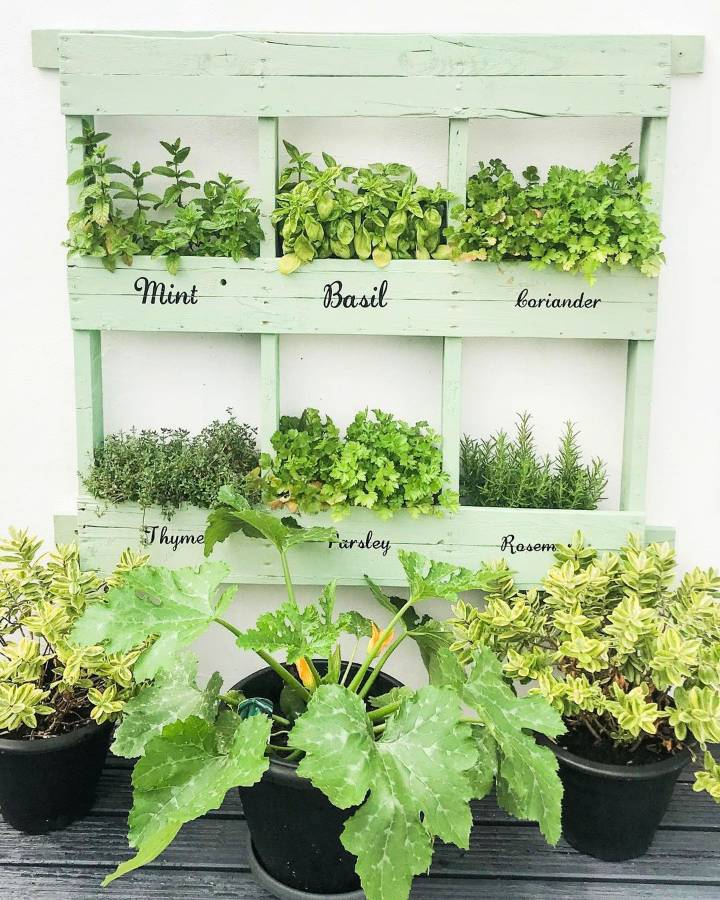 beautiful pallet herb garden Time to sort out my spring bulbs hoping for a flourish of tulips and daffodils