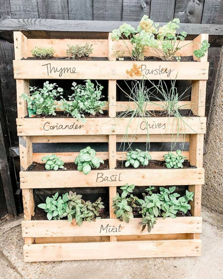 couldnt resist showing off our 'grow your own veggie patch and herb garden. Foraged found these pallets from some of our neighbours who were doing some