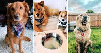 8 best gifts for dog lovers with step by step instructions
