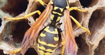 Winter Wasp Problem