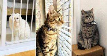 Gadgets You Need if You Have a Cat at Home