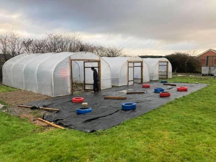 How to Start A Greenhouse