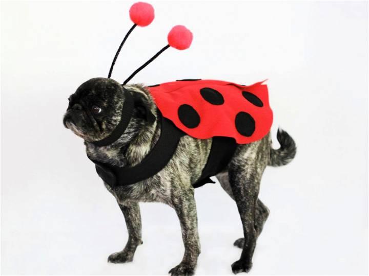 Make a Ladybug Halloween Costume for a Dog