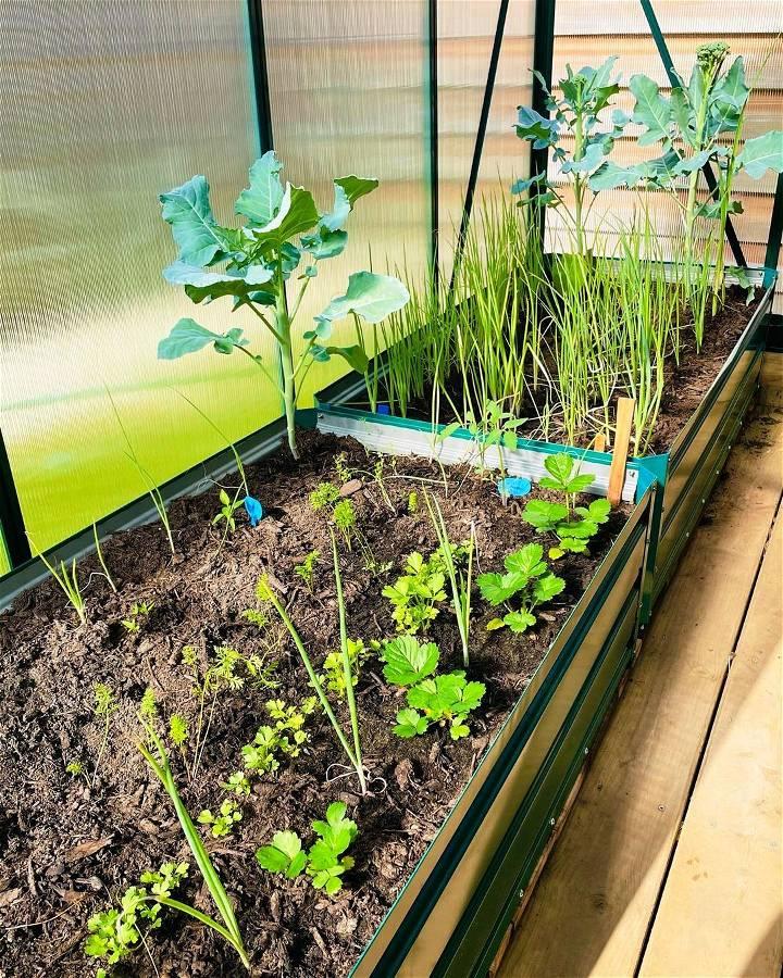 DIY Summer Garden