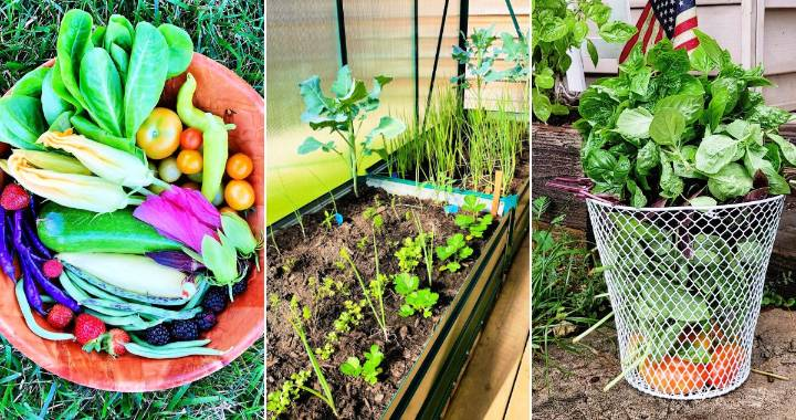 Summer Garden What to Plant in Summer and How to Tend Your Garden