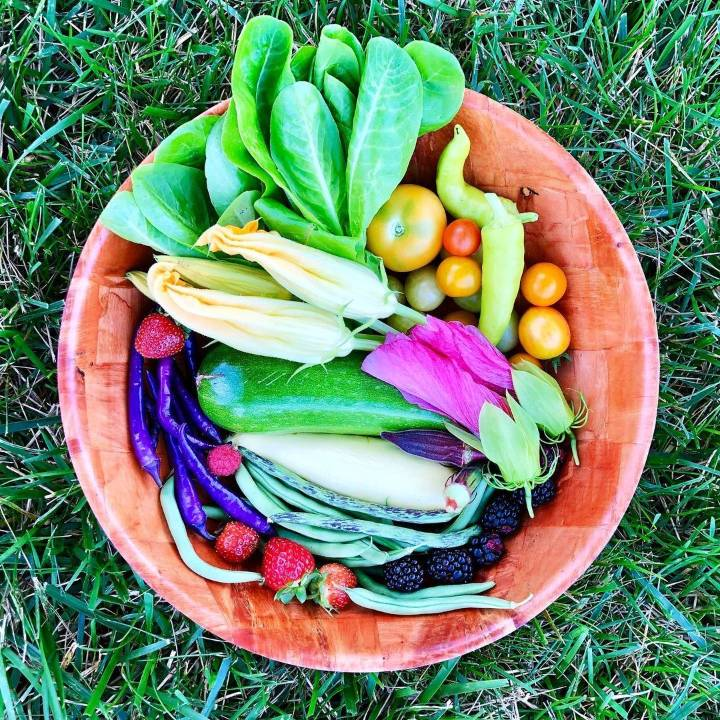 What to Plant in Summer and How to Tend Your Garden
